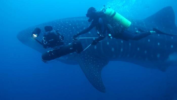 Image du programme Galapagos, au royaume des requins-baleines