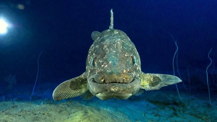 Image du programme Le Coelacanthe, plongée vers nos origines