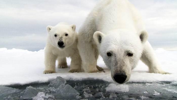 Image du programme Caméra cachée : ours espionnés