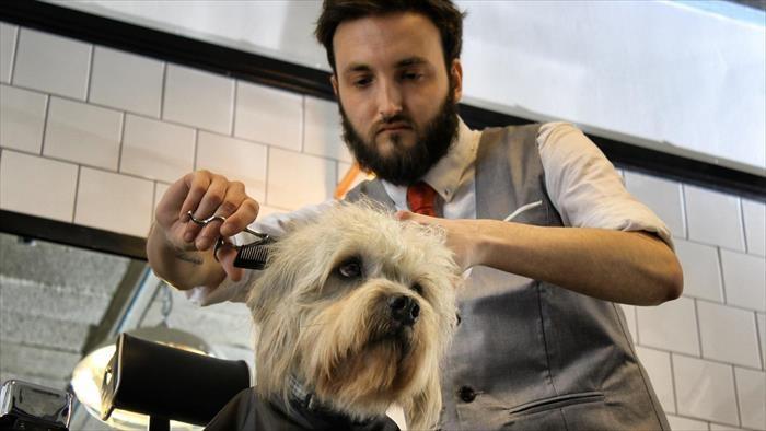 Image du programme Dans la vie d'un chien