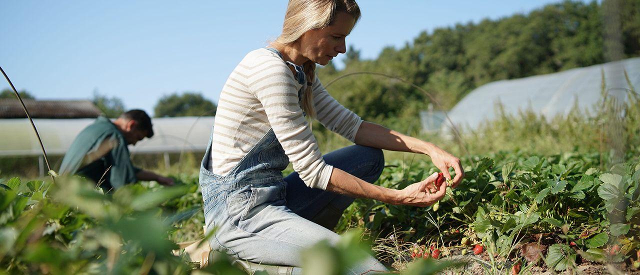 Covid-19 : des mesures pour faciliter l'embauche de saisonniers dans l'agriculture